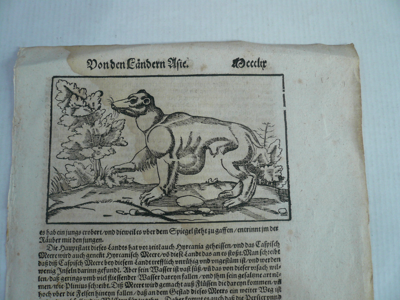 Panther, anno 1590, Sebastian Münster, Cosmographia